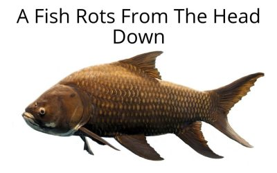 A Fish Rots From The Head Down